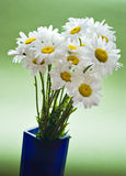 White daises Stock Photos