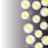 Abstract White Daisies in Gray Background vector illustration
