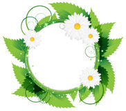 White daisies. On a  green foliage background. Round frame with place for text Stock Photography