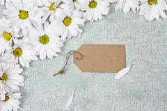 White Daisies and Blank Card Royalty Free Stock Photo