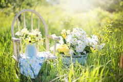 White Daisies on Blue Ceramic Pot Beside White Wooden Armchair on Green Grass Field during Daytime Stock Photos