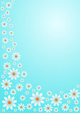 White daisies on blue sky. White daisies on a blue sky greeting card Stock Photos