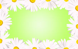 White daisies border over green. It's spring: White daisy flowers forming a border over a spring baby green background Royalty Free Stock Photography