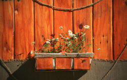 White daisies in a brown pot on a wooden background Royalty Free Stock Photos