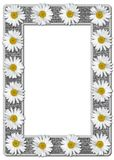 White Daisies on Burlap Photo Frame Royalty Free Stock Photos