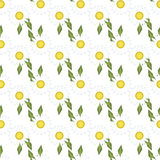White daisies chamomile seamless pattern vector. Royalty Free Stock Photos