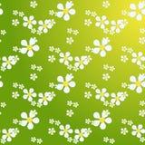 White daisies chamomile seamless pattern . White daisies seamless pattern on yellow background. Daisy field chamomile seamless pattern abstract design plant Royalty Free Stock Photos