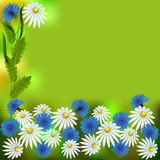 White daisies and cornflowers. Greeting card, white daisies and cornflowers with leaves, flowers and leave set for greeting card on green background, vector Royalty Free Stock Photos
