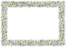 White Daisies frame. From The Floral Frames series Stock Photo