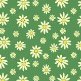 White daisies. On a green background Stock Images