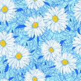 White daisies on a lace background. Vector seamless pattern with white daisies on a blue lace background Royalty Free Stock Photography