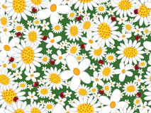White daisies and ladybugs. (vector) - seamless tiled pattern Royalty Free Stock Image
