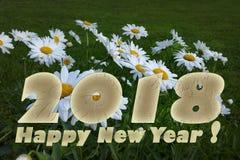 2018 white daisies Royalty Free Stock Photos