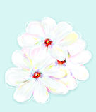 White daisies. The picture painted blue background Royalty Free Stock Photography