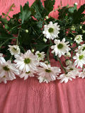 White daisies on a salmon colored blanket Royalty Free Stock Photography