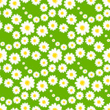White daisies seamless pattern. On a green background.Daisy field Royalty Free Stock Photography