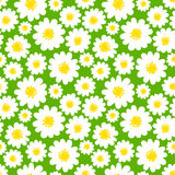 White daisies seamless pattern Royalty Free Stock Images