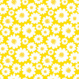 White daisies seamless pattern Stock Image