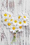 White daisies. Royalty Free Stock Images