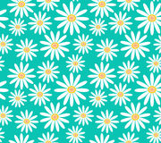 White daisies on turquoise background seamless vector pattern Royalty Free Stock Photo