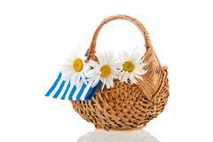 White daisies in wicker basket Stock Photos