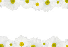 White daisy background Stock Photo