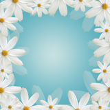 White daisy beautiful frame Royalty Free Stock Photo