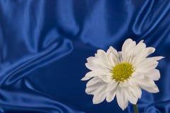 White Daisy On Blue Satin Background Royalty Free Stock Images