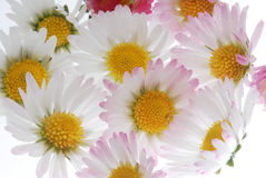 White daisy bouquet royalty free stock images