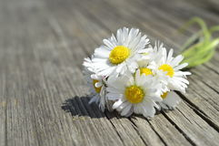 White daisy bouquet on wooden bench. White bouquet out of daysies on wooden bench in park Stock Photo