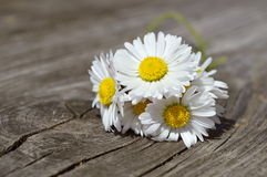 White daisy bouquet on wooden bench. White bouquet out of daysies on wooden bench in park Royalty Free Stock Images