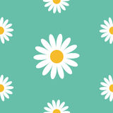White daisy chamomile. Cute flower plant collection. Camomile icon Growing concept. Seamless Pattern Wrapping paper, textile templ Royalty Free Stock Photo