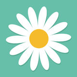 White daisy chamomile. Cute flower plant collection. Love card. Camomile icon Growing concept. Flat design. Green background. Isol Stock Images