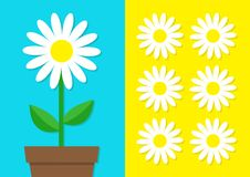 White daisy chamomile icon set. Flower pot. Cute plant collection. Love card. Camomile Growing concept. Flat design. Bright blue y Royalty Free Stock Photos
