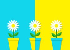 White daisy chamomile icon. Three flower pot set. Cute plant collection. Love card. Camomile Growing concept. Flat design. Bright Royalty Free Stock Image