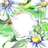 White daisy floral botanical flowers. Watercolor background illustration set. Frame border ornament square. White daisy floral botanical flowers. Wild spring stock illustration