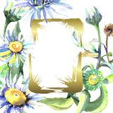 White daisy floral botanical flowers. Watercolor background illustration set. Frame border ornament square. White daisy floral botanical flowers. Wild spring royalty free illustration