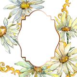 White daisy floral botanical flowers. Watercolor background illustration set. Frame border ornament square. White daisy floral botanical flowers. Wild spring vector illustration