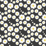 White daisy floral seamless pattern Royalty Free Stock Images