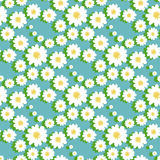 White daisy floral seamless pattern Stock Images