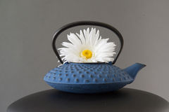 White Daisy Flower In Blue Tea Pot. Decorative artificial white daisy flower in blue fancy Japanese tea pot. Grey background stock images
