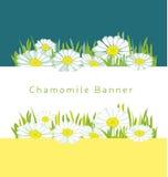 White daisy flower Stock Image