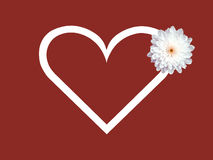 White daisy flower and heart shape valentines day card red background Royalty Free Stock Photos