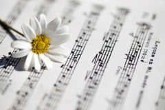 White Daisy Flower on Music Notes Sheet Royalty Free Stock Images