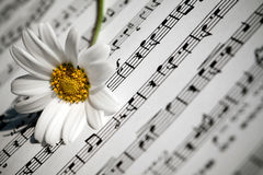 White Daisy Flower on Music Notes Sheet Royalty Free Stock Photo