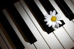 White Daisy Flower on Piano Keys Stock Photo