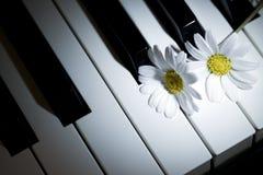 White Daisy Flower on Piano Keys Royalty Free Stock Photo