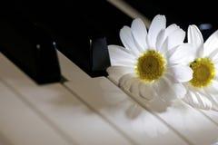 White Daisy Flower on Piano Keys Stock Photography