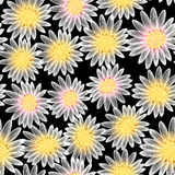 White daisy flower in a seamless pattern Royalty Free Stock Photos