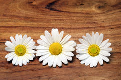 White daisy flowers for background Stock Photography